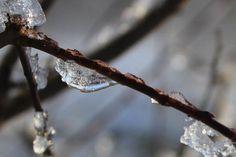 gren med is