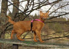 Feel Purrr kissanvaljas on ergonominen ja kevyt valjas kissalle. / Feel Purrr cat harness is ergonomic and light harness for cat.