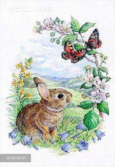 Yooniq images - Baby Rabbit with Peacock Butterflies, surrounded by brambles, toadflax and harebells.