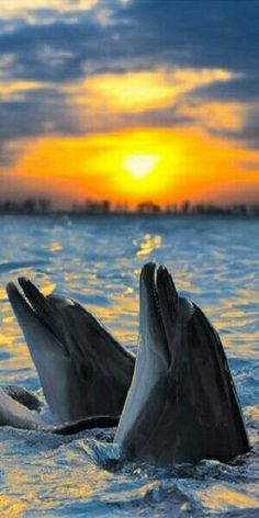 Abigails two most important dolphin friends ...kiwi and boscoe