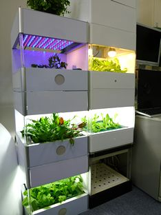 4 Easy Steps to Set-Up Your Own Backyard Aquaponics System - Tools And Tricks Club Indoor Hydroponics, Hydroponic Farming, Backyard Aquaponics, Aquaponics System, Aquaponics Plants, Indoor Farming, Organic Gardening, Gardening Tips, Container Gardening