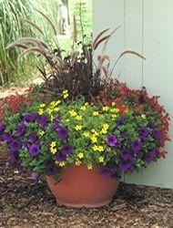 Free Container Garden Designs for Sun