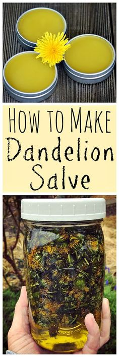 When dandelions are blooming make this healing dandelion salve! When dandelions are blooming make this healing dandelion salve! Healing Herbs, Medicinal Herbs, Natural Healing, Natural Oils, Natural Home Remedies, Herbal Remedies, Health Remedies, Natural Medicine, Herbal Medicine