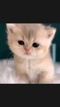 Cute Baby Cats, Kittens Cutest, Cats And Kittens, Sad Cat, Cat Gif, Funny Videos, Fur Babies, Cute Animals, Kitty