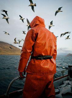 Fish Work Bering Sea by Corey Arnold