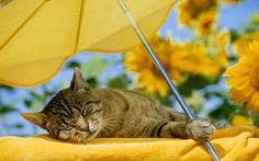 Cat sleeping Tips for a cat-friendly garden
