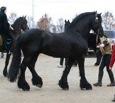 horse 37: black stallion by cyborgsuzystock.deviantart.com