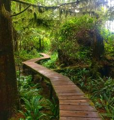 This Boardwalk Trail Takes You Through An Ancient Rainforest In Canada - Narcity Garden Paths, Garden Bridge, Garden Landscape Design, Landscape Architecture, Jungle Gardens, Ontario Travel, Tropical Garden, Dream Garden, Pathways
