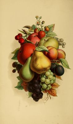 Vintage Ephemera: Lithograph, assorted fruit, 1875