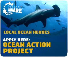 Do you have a or marine debris grass root project? Apply to the by October Marine Debris, Sharks, Change The World, Small Groups, My Hero, Something To Do, Grass, October