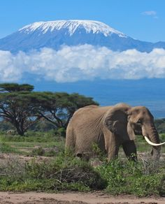 KILIMANJARO NATIONAL PARK, Tanzania: includes the whole of Mount Kilimanjaro above the tree line & the surrounding montane forest. The African elephants which range around the mountain developed between 5-2 million years ago. The peak was first recorded as reached in 1889, although Yohani Kinyala Lauwo, who probably was part of that expedition, claimed to have climbed the mountain multiple times before the recorded ascent.