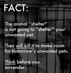 Please THINK before you surrender your pet at a kill shelter! Spread the word! #dogs #pets #canine