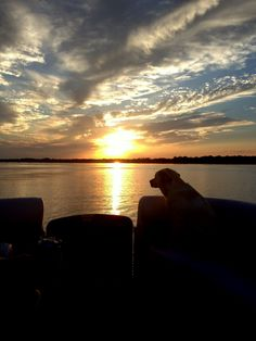 Cedar Creek Lake in Pictures: Sunset cruise with Lola May, our lake loving puppy
