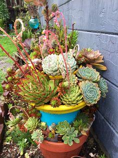 Murphyfrog's succulent garden, drought resistant, succulent arrangement, hens and chicks, colorful plants, cactus, Susan's garden