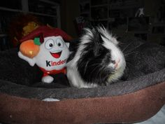 Oreo and his Kinder Egg 2