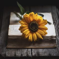 A Sunflower 🌻 on top of the opened book 📖 Sunflower Photography, Book Photography, Creative Photography, Book Aesthetic, Flower Aesthetic, Aesthetic Pictures, Tumblr Wallpaper, Nature Wallpaper, Trendy Wallpaper
