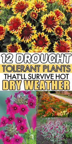 Succulent Gardening, Succulents Garden, Garden Plants, Landscaping Plants, Water Plants, Landscaping Ideas, Backyard Ideas, Growing Vegetables In Pots, When To Plant Vegetables