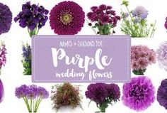 The essential white wedding flowers guide types of white flowers image result for purple wedding flowers mightylinksfo