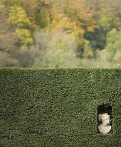 Garden Hedges, Garden Urns, Gothic Garden, Family Photo Frames, Boxwood Topiary, Tunbridge Wells, House Plant Care, Big Leaves, Garden Cottage