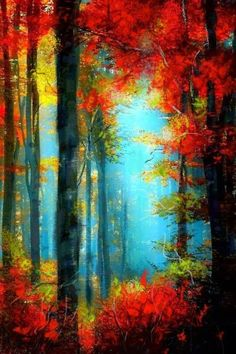Nature's stained glass Autumn…beauty it always looks this Beautiful World, Beautiful Images, Beautiful Forest, Simply Beautiful, Beautiful Beautiful, Beautiful Scenery, Absolutely Gorgeous, Autumn Forest, Forest Light