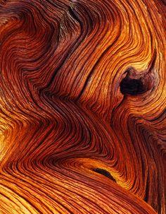 Struktura vláken uvnitř dřeva