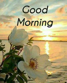Good Morning Nature, Morning Sky, Beautiful Morning, Good Morning Flowers Pictures, Morning Pictures, Flower Pictures, Good Morning Inspirational Quotes, Good Morning Quotes, Disney Kiss