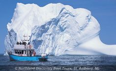Visit Northland Discovery Boat Tours in St. Newfoundland Island, Newfoundland Canada, Newfoundland And Labrador, O Canada, Canada Tours, Canadian Travel, Atlantic Canada, Holiday Places, Island Tour