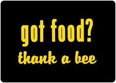 Got Food Thank a Bee Vinyl Decal - Honey Bee Car Window Decal - Car Sticker - Beekeeper Bumper Sticker - We love bees