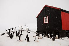 Port Lockroy, Antartica. Once a research station, now a museum...