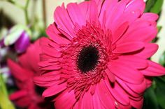Pink Flower Photo by Alex Patel — National Geographic Your Shot