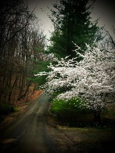 ✮ Northern Virginia, always have wanted to bee in the mountains when the leaves change! Cool Pictures, Cool Photos, Virginia Is For Lovers, Beautiful Places, Beautiful Scenery, Back Road, Northern Virginia, Take Me Home, Beautiful Landscapes