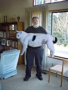 I wouldn't call this cat fat, I would call it HUGE --The Weird Picture Archive