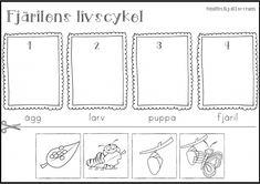 Fjärilens livscykel! – Storstadsmamman Study Ideas, Life Cycles, Bar Chart, Insects, Barn, Science, Education, Flowers, Lenses