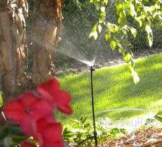 Drip Irrigation Raised Emitter - Works Great! www.blueskyrain.com Lawn Sprinkler System, Lawn Sprinklers, Drip Irrigation, Landscape, Flowers, Scenery, Royal Icing Flowers, Flower, Corner Landscaping