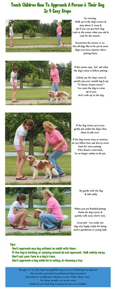 Teaching kids to greet dogs infographic.  Please feel free to share & print as is.
