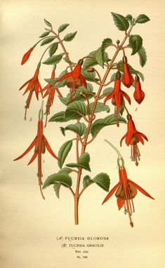 1896 - Favourite flowers of garden and greenhouse / - Biodiversity Heritage Library