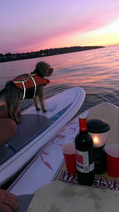 Ohlie is enjoying the Sunset at Kitsilano on her (furless friend's) Sand Up Paddle Board Paddle Boarding, Vancouver, Pup, America, Sunset, Travel, Viajes, Dog Baby, Puppies