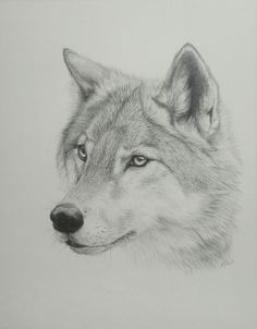 I love this wolf.