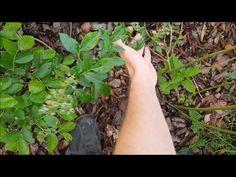 Walled Garden, Garden Ideas, Sad, Youtube, Lawn And Garden, Balcony, Fenced Garden, Landscaping Ideas, Backyard Ideas