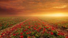 ★ Fiery Red ★ #Pic #Nice #Natural #Tsunami #Tsulatino #Flowers #Like #Seguime Hind Knife | tsū