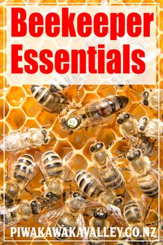 Bee Keeping Learn How to Keep Bees Successfully ebook /& Plans on CD FREE SHIP