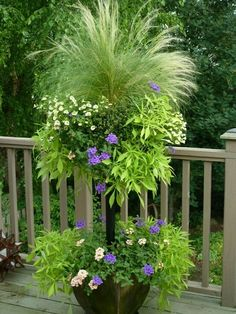 "Stem Basket tiered planter - ""Basket Column contains coral and purple verbena, lacy sweet potato vines (ipomoea), pale yellow million bells (petunias), and a centerpiece of annual grass. Container Plants, Container Gardening, Plant Containers, Container Flowers, Outdoor Plants, Outdoor Gardens, Potted Plants, Porch Plants, Plantation"