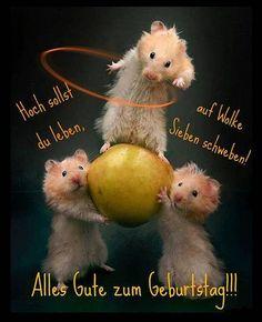 Hoch sollst du leben, auf Wolke Sieben schweben! Alles Gute zum Geburtstag!!!