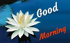 Good Morning Images For Whatsapp Good Morning Wishes Gif, Good Morning In Hindi, Good Morning Beautiful Flowers, Good Morning Nature, Morning Wishes Quotes, Good Morning Happy Sunday, Good Morning Roses, Good Morning Images Flowers, Good Morning Photos