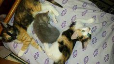 Bottlefeeding kitten rockstar! adopt Kitten Happy
