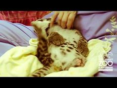 Clouded Leopard Cub at Point Defiance Zoo & Aquarium