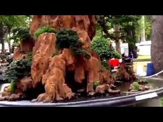 WORLD OF NATURE AND LIFE: EXHIBITION   BONSAI   VIETNAM   PENJING  GARDEN