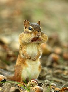Phil saw a squirrel thats face was stuffed like this in the yard the other day