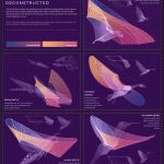 Deconstructed Bird and Insect Wing Patterns by Eleanor Lutz