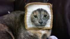 Breading | The 57 Greatest Pet Costumes EVER